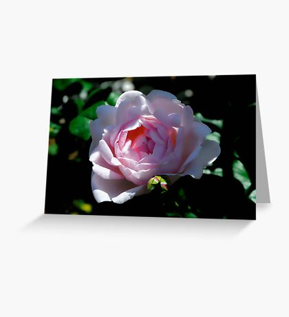 Rose in Dappled Light Greeting Card