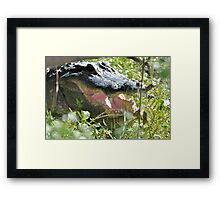 Lunch Is Here Framed Print