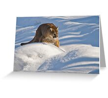 Cougar in some Snow - Ontario Canada Greeting Card