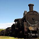 Dorrigo Trains by Clare Colins