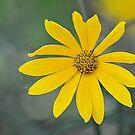 Wild Flower by Jeff Ore