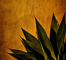 Adobe and Agave at Sundown by Chris Lord
