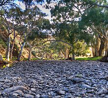 Flinders .. or Murraylands????? by Dave  Hartley