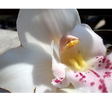Soft Fresh Cymbidium Photographic Print