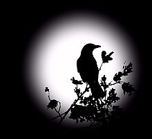 Blackbird in Silhouette  by David Dehner