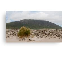 Windswept Achill Canvas Print