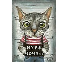 Mugshot of a cat felon arrested while attempting a bank heist Photographic Print