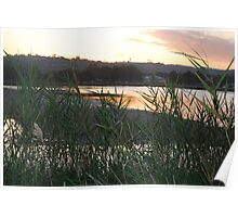 Reeds at Narrabeen Lakes Poster