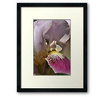 Love of Iris Framed Print
