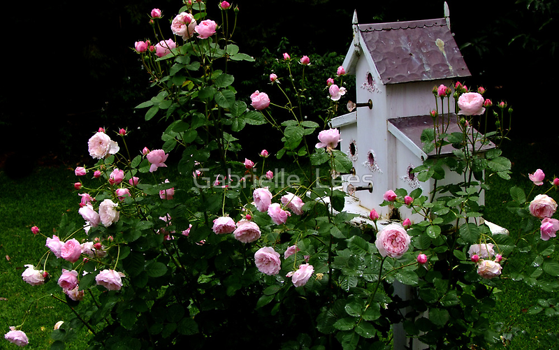Mayor of Casterbridge Rose and Birdhouse by Gabrielle  Lees