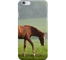 Filly iPhone Case/Skin