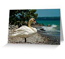 On The Shores Of Lake Ontario Greeting Card