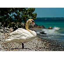 On The Shores Of Lake Ontario Photographic Print