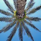 Palm Up by LaFleureRouge1