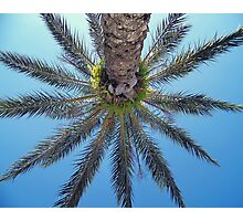 Palm Up Photographic Print