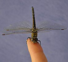 The dragonfly tamer ;) by Trudi Hipworth