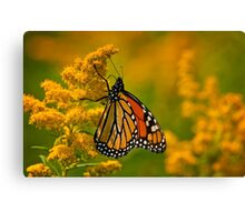 Monarch Butterfly - 23 Canvas Print