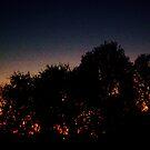 evening sky 4 by Tee Mezz