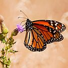 Monarch Butterfly - 29 by Michael Cummings