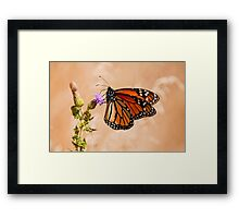 Monarch Butterfly - 29 Framed Print