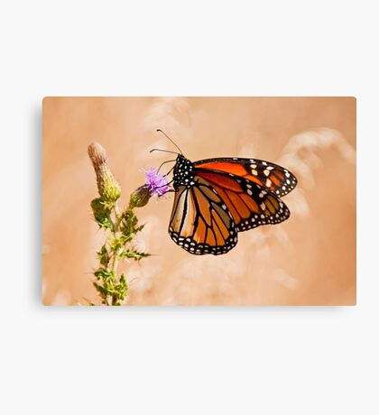 Monarch Butterfly - 29 Canvas Print