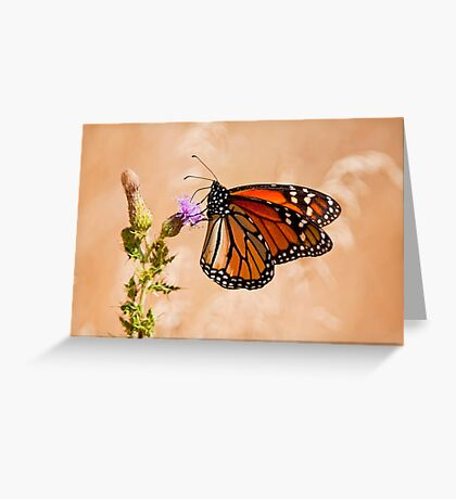 Monarch Butterfly - 29 Greeting Card
