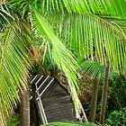 Boardwalk stairs - leading through tropical palms by Cheryl Sterkenburg