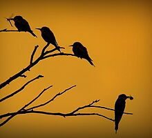 Silhouettes of Bee-eaters by LubosHouska
