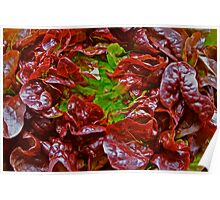 Fresh coral-red lettuce Poster