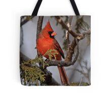 Male Northern Cardinal in Cedar Tree - Ottawa, Ontario Tote Bag