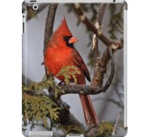 Male Northern Cardinal in Cedar Tree - Ottawa, Ontario iPad Case/Skin