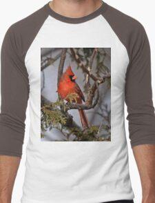 Male Northern Cardinal in Cedar Tree - Ottawa, Ontario T-Shirt