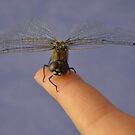 Lucky Dragonfly  by Trudi Hipworth