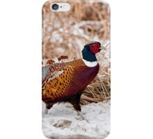 Ringed Neck Pheasant iPhone Case/Skin