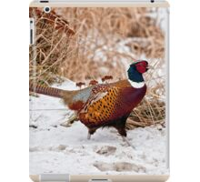 Ringed Neck Pheasant iPad Case/Skin