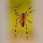 Caught on Web by Diane Philips
