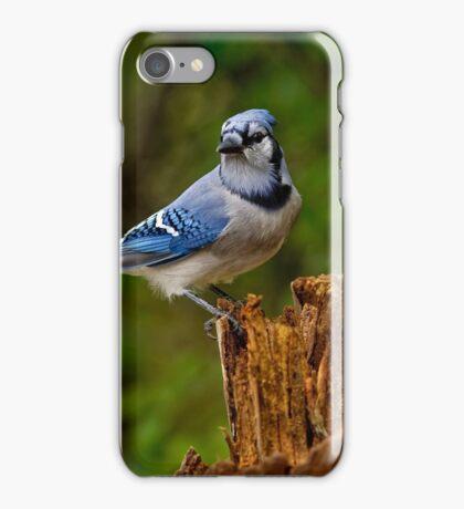 Blue Jay on Stump - Ottawa, Ontario iPhone Case/Skin