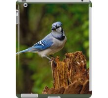 Blue Jay on Stump - Ottawa, Ontario iPad Case/Skin