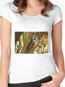 Blue Jay in Shrub - Ottawa, Ontario Women's Fitted Scoop T-Shirt