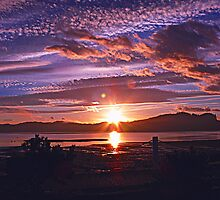 Morning Glory by Gail Bridger