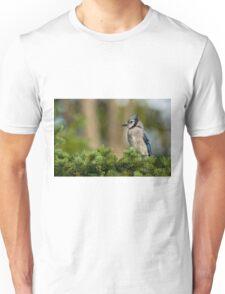 Blue Jay in Spruce Tree - Ottawa, Ontario T-Shirt