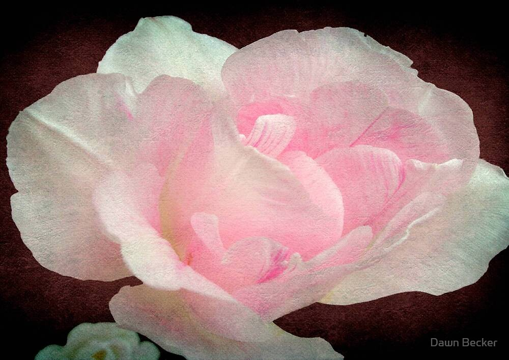 Pretty in Pink ©  by Dawn M. Becker