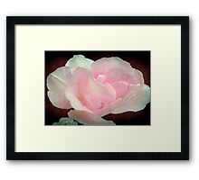 Pretty in Pink ©  Framed Print