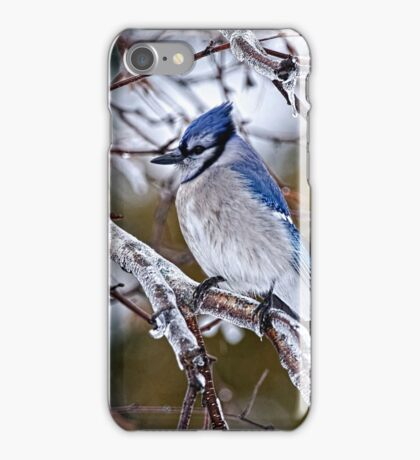 Blue Jay on Ice Covered Branch - Ottawa, Ontario iPhone Case/Skin