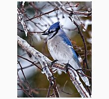Blue Jay on Ice Covered Branch - Ottawa, Ontario Unisex T-Shirt