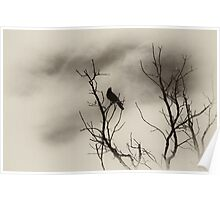 A bird on a leafless tree  Poster