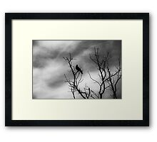 A bird on a leafless tree version 2 Framed Print