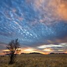 Tamarisk Tree by Rob  Southey