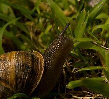 Snail III - a couple by liza1880
