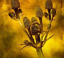 Eryngium Gold by John Edwards
